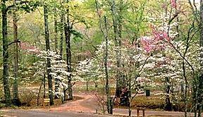 Tyler State Park Dogwood Trails tx eguide azalea