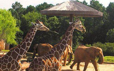 caldwell zoo tyler tx eguide